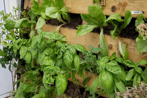 pallet-vertical-garden (1)