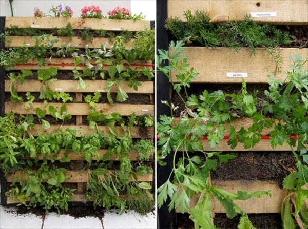 Creates pallet vertical garden yourself diy furniture for How to build a vertical pallet garden