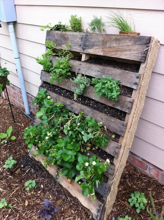 Refresh your eyes and mind with pallet vegetable garden for Vegetable garden