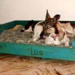 DIY Painted Pallet Dog Bed